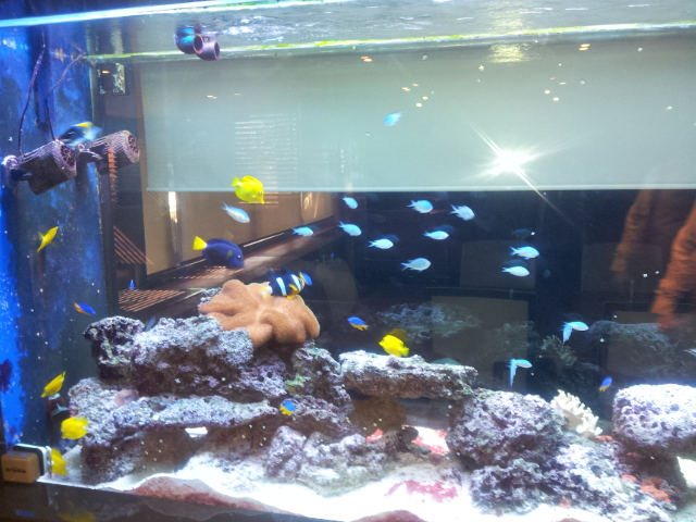 4 ton deniz akvaryumu.jpg