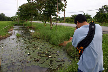 61 thailand_paddy_field_canal.jpg
