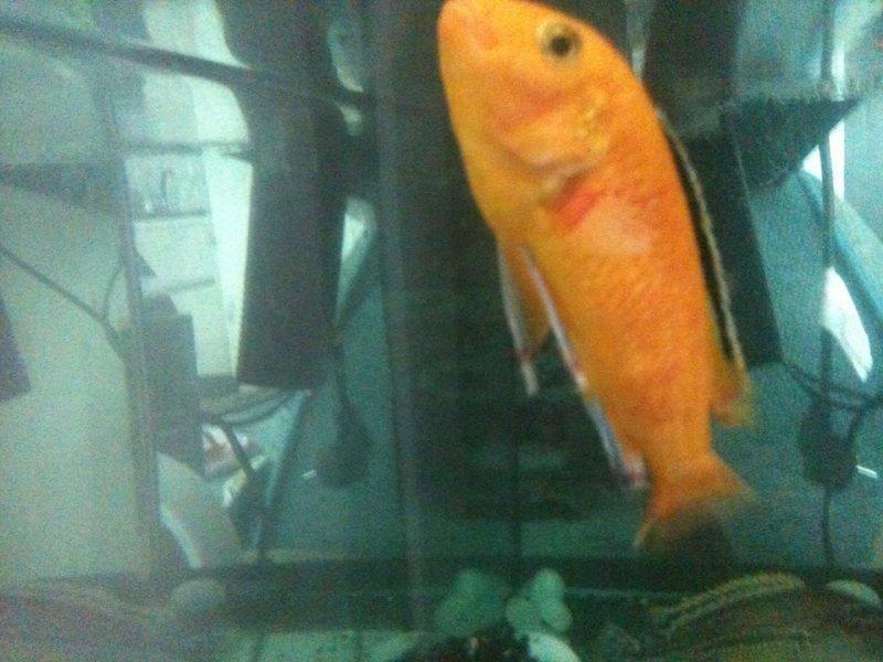 balık 1.jpg