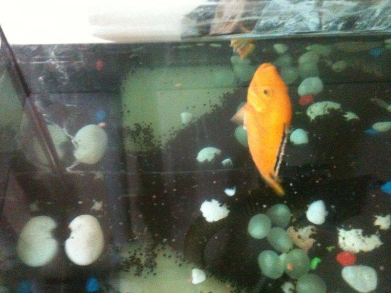 balık 3.jpg