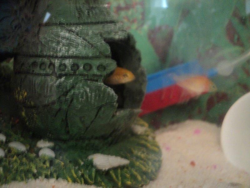balıklarım 003.jpg