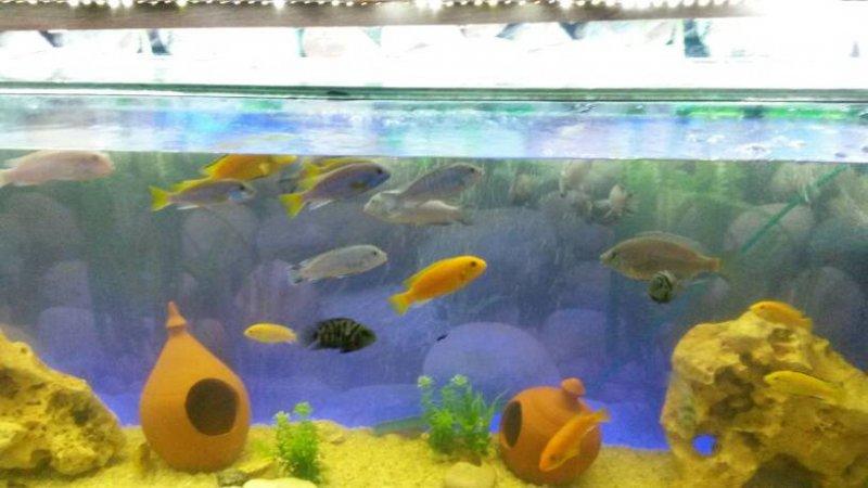 balıklar neden hareketsiz.jpg