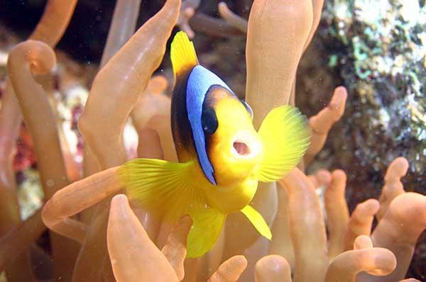 Balıklarda Esneme.jpg