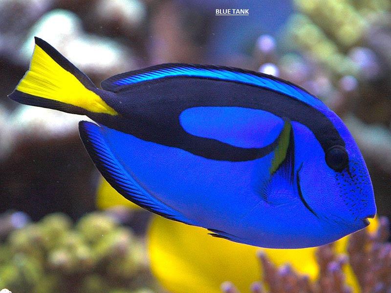 blue tank.jpg