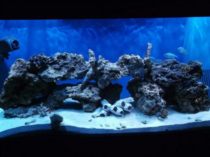 deniz akvaryumu 100x.jpg