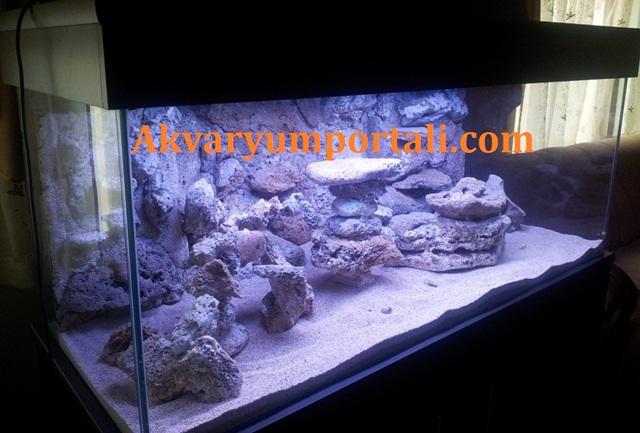 Deniz Akvaryumu Dekoru.jpg