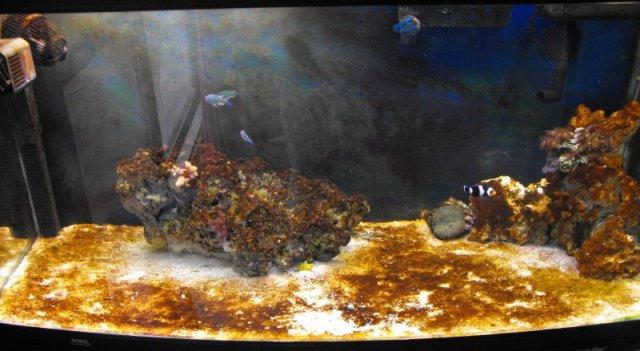 deniz akvaryumu diatom.jpg