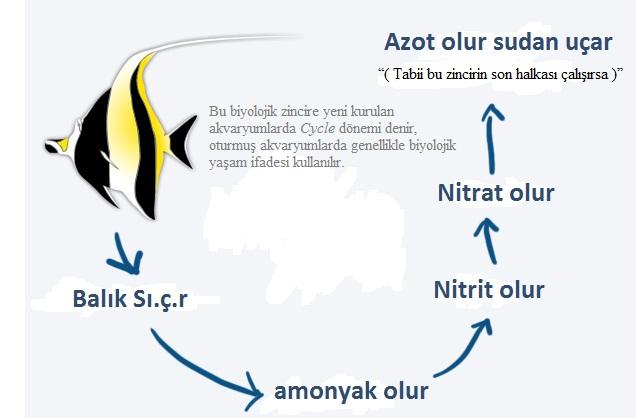 Deniz akvaryumu Nitrat sorunu.jpg