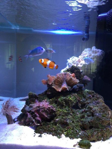 Deniz Akvaryumu palyaço balığı.jpg