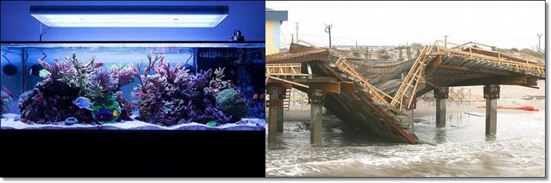 deniz akvaryumu satanlar.jpg