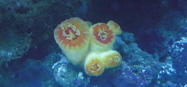 deniz akvaryumunda amonyak.png