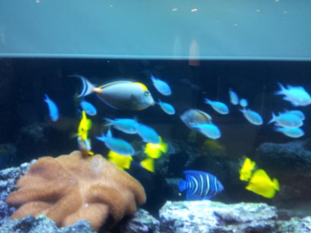 Divranozlu deniz akvaryumu.jpg