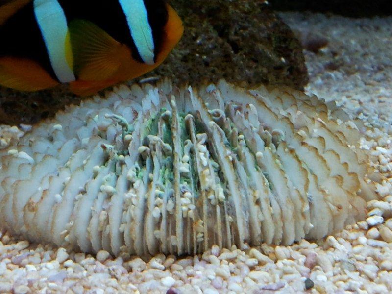Fungia coral.jpg