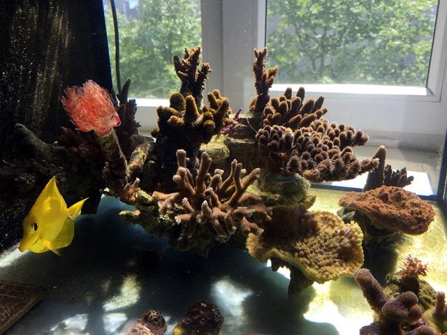 güneş aydınlatma sps mercan.jpg