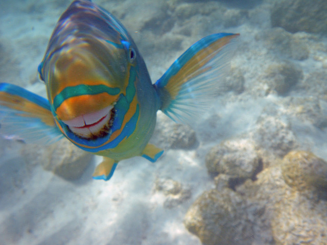 happy-fish.jpg