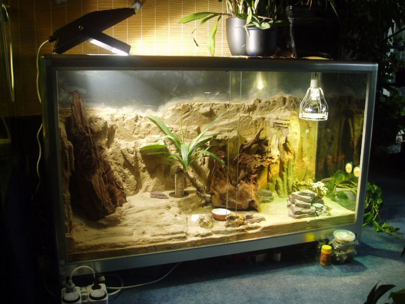 Содержание гекконов в домашних условиях