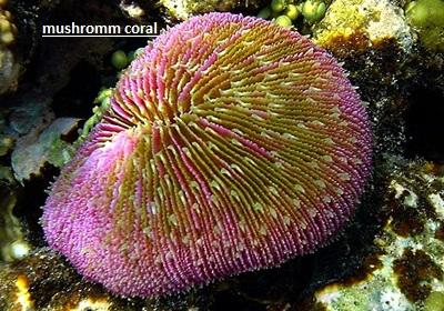 mushromm coral.jpg
