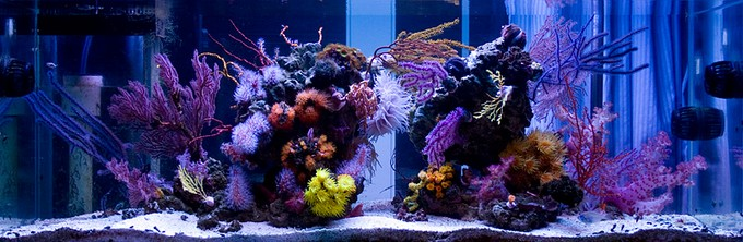 nps deniz akvaryumu mercanları.jpg