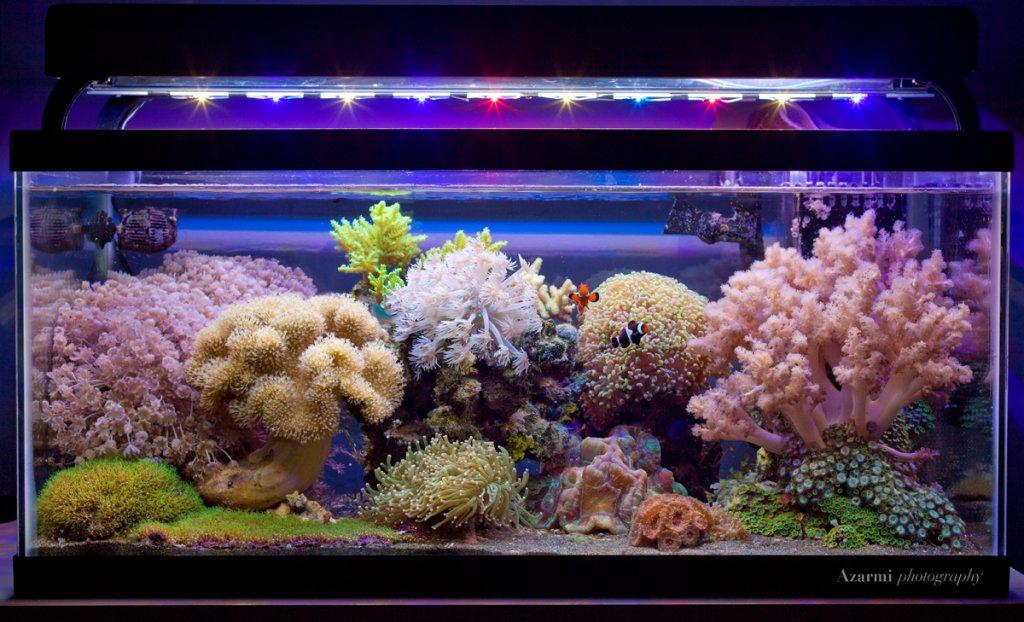 reef-2-29-12.jpg