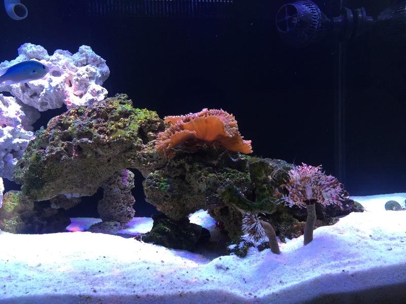 resif tank kurulumu.jpg