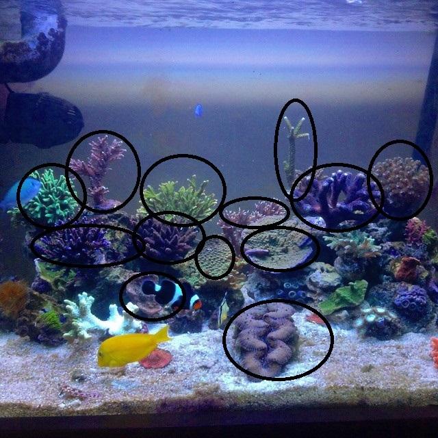 satılık akvaryum mercanlari.jpeg