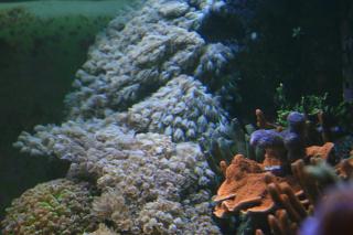 satılık xenia mercan.jpeg