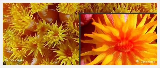 sun-coral-beslenmesi.jpg