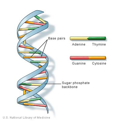 temel genetik nedir.jpg