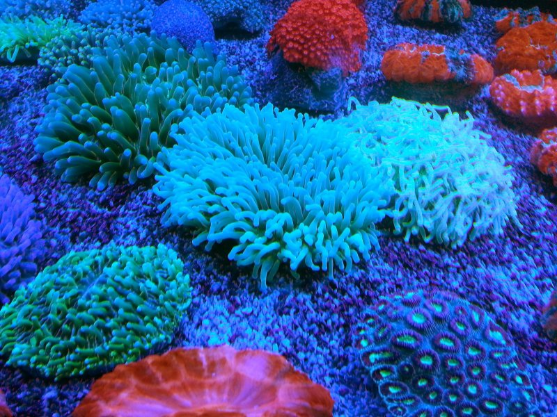 Tuzlu su mercanları.jpg
