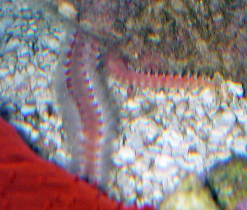worm2.jpg