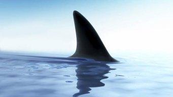 shark78