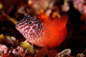 Pasifik Yerli Deniz Canlıları