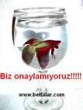 Bettalar.com