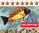 GOLD WATOZ