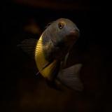 akvarist
