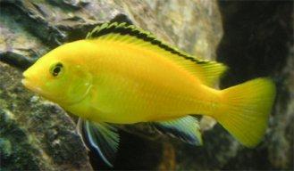 Tatlı Balık 55